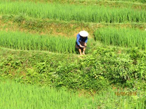 Voyage femme Vietnam