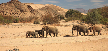 Namibie Famille