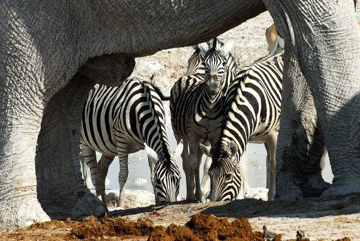 Voyage Namibie Famille
