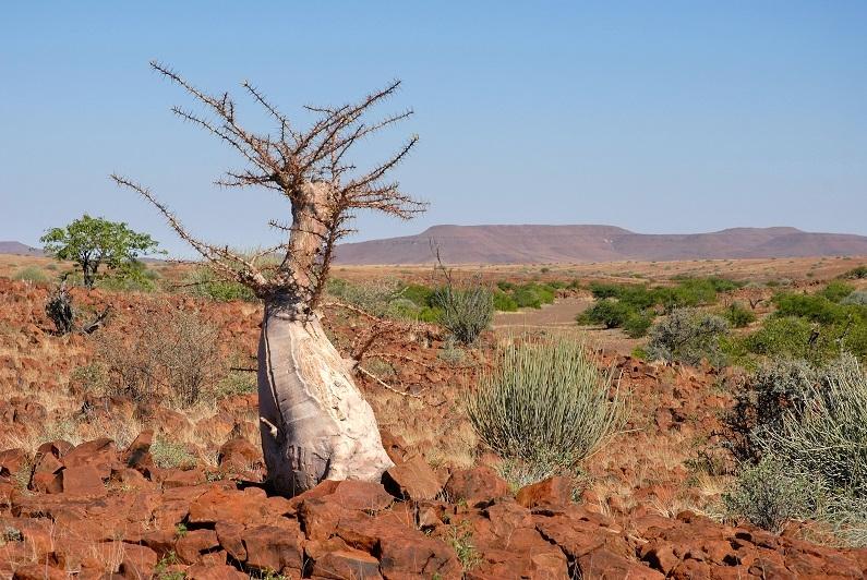 VOYAGE PHOTO NAMIBIE