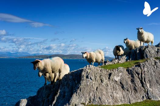 Voyage famille Irlande